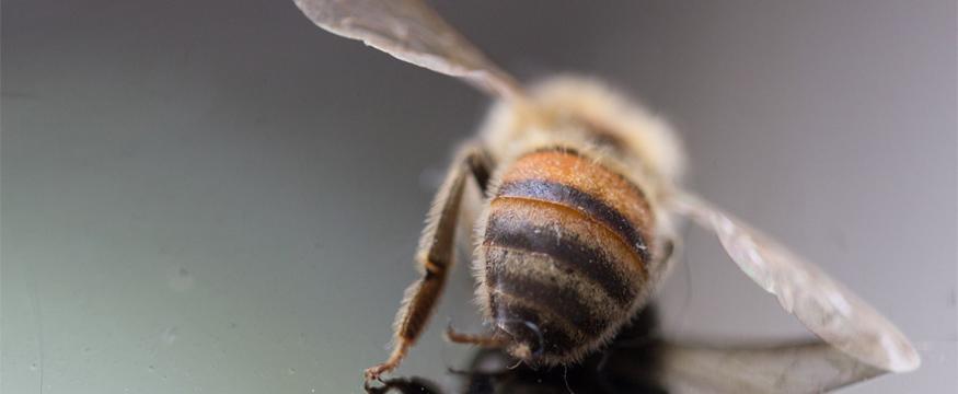 8. Bienensterben